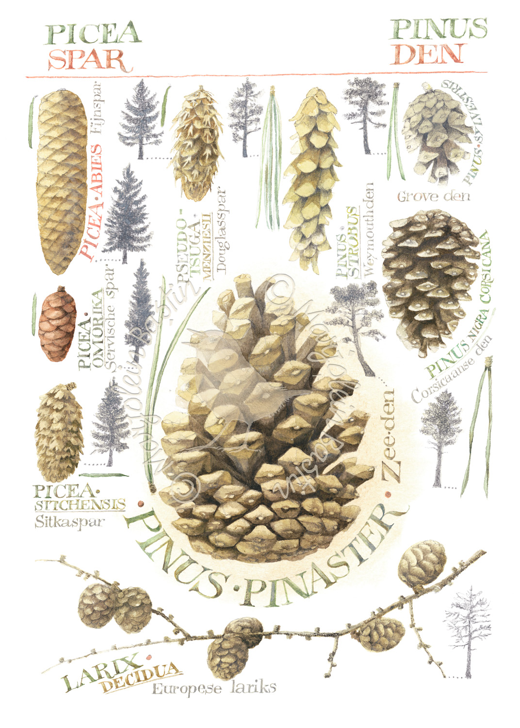 Assorted Pinecones