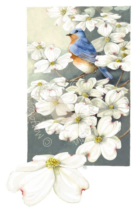 Bluebird in Blooming Dogwood