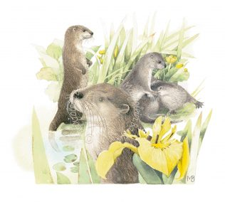 Otter Neighbors
