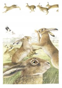 Rivalry Among Hares