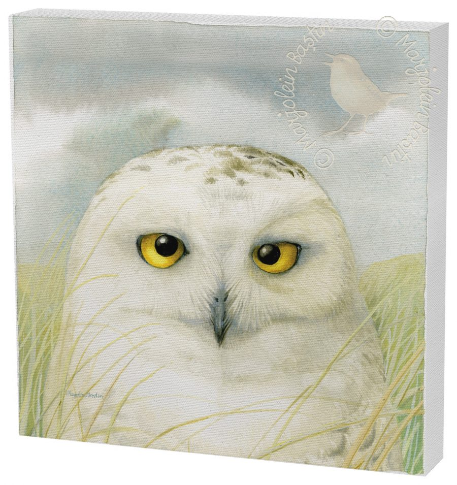 "Snowy Owl Wisdom - 12"" x 12"" Gallery Wrapped Canvas"