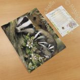 "Badger Family - 11"" x 14"" Art Prints"
