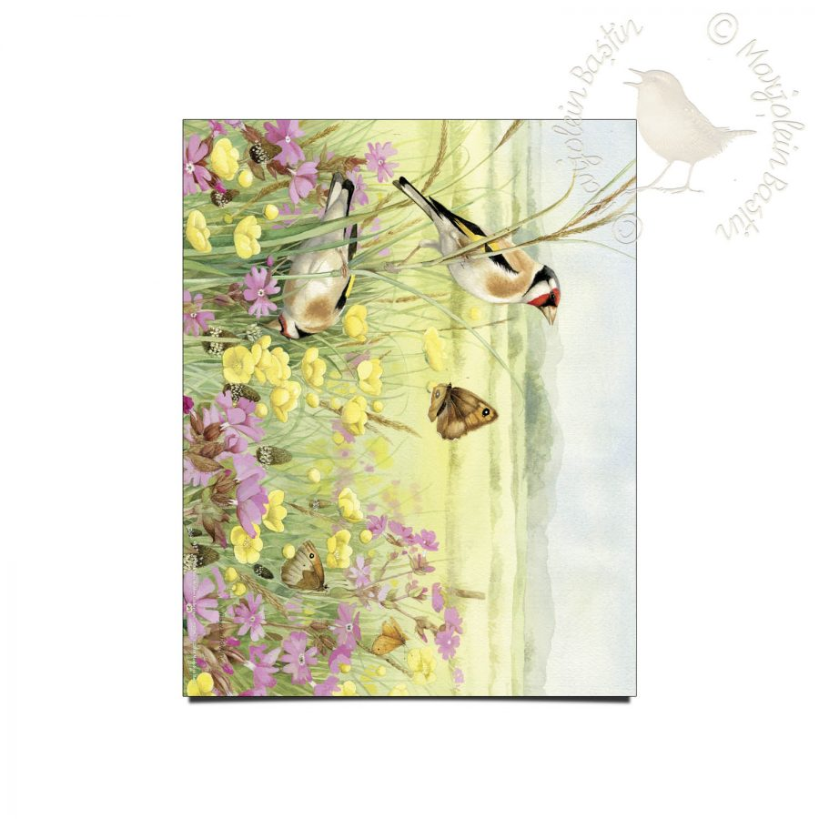 "European Goldfinch in Meadow - 11"" x 14"" Art Prints"