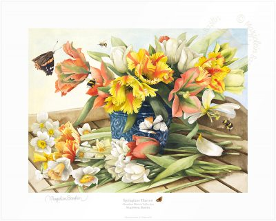 Springtime Harvest - Limited Edition Paper