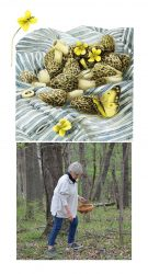 Marjolein Bastin's Diary – Morel Mushrooms