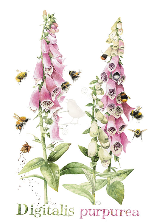 Beautiful Foxglove