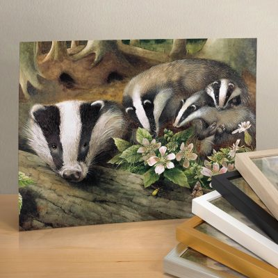 "Badger Family - 11"" X 14"" Art Print"