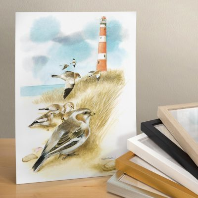 "Snow Buntings - 11"" X 14"" Art Print"