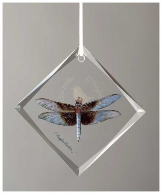 "Yellow Sided Widow Skimmer Dragonfly - 4.5"" x 4.5"" Glass Ornament"