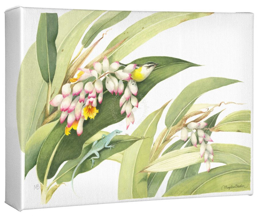 """Flowering Ginger Plant 9"""" x 12"""" Gallery Wrapped Canvas"""