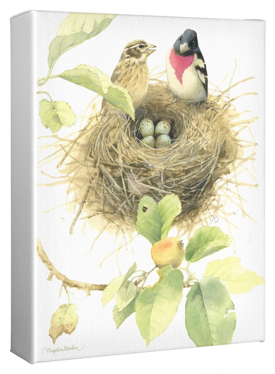 """Starting a Family of Rose Breasted Grosbeaks 12"""" x 9"""" Gallery Wrapped Canvas"""